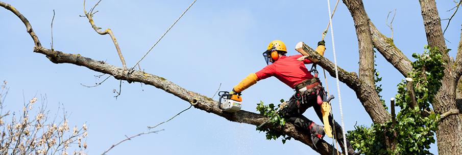 Recensement des arbres dangereux et/ou gênants