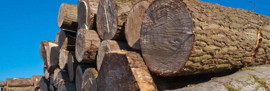 Du bois de chauffage mis à disposition gratuitement